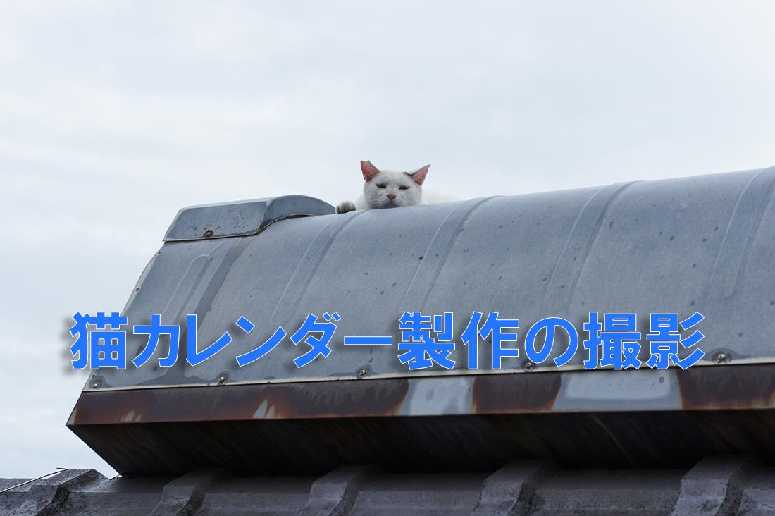猫カレンダー製作撮影